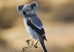 Eine Stelze mit dem retuschierten Kopf eines Koalabärs.