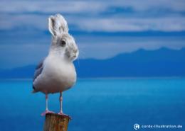 Eine Möwe mit dem Kopf eines Kaninchens als Fotoretusche.